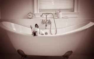 Pet-photography-vero-beach-dog-portraits-033