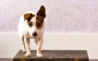Pet-photography-vero-beach-dog-portraits-034