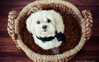 Pet-photography-vero-beach-dog-portraits-035