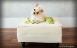 Pet-photography-vero-beach-dog-portraits-042